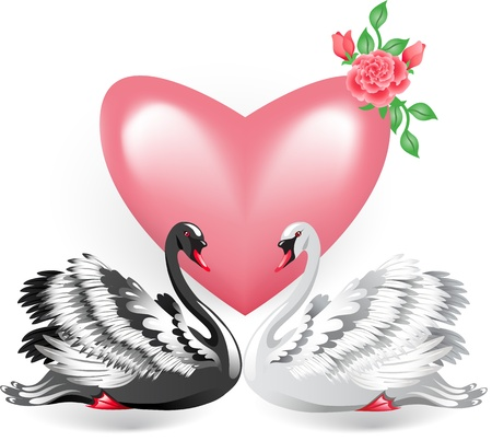 swimming swan: Elegant white and black swan with pink heart