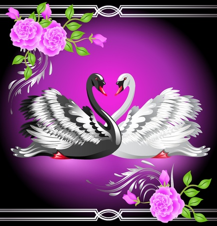 Elegant white and black swan on violet background with roses