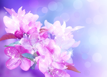 Cherry blossom and shine stars photo