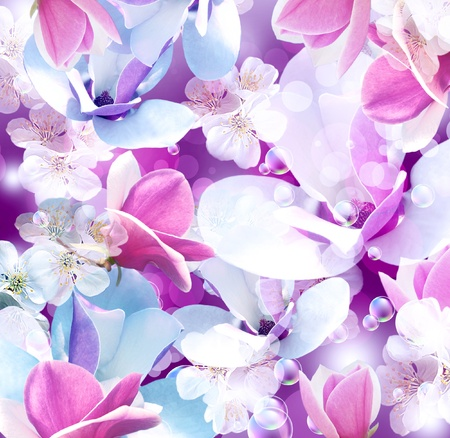 apple blossom: Background with magnolia and apple flowers