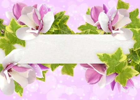 Magnolia on the pink background with place for text photo