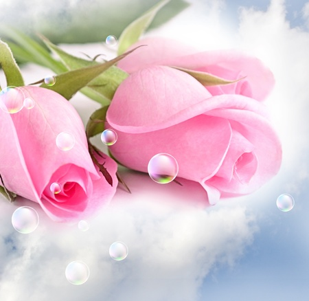 Three pink roses in the clouds photo
