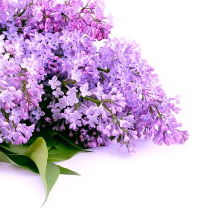 Ramo de flores color lila sobre fondo blanco