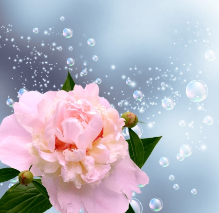Card with peony, bubbles and  flying petals  photo
