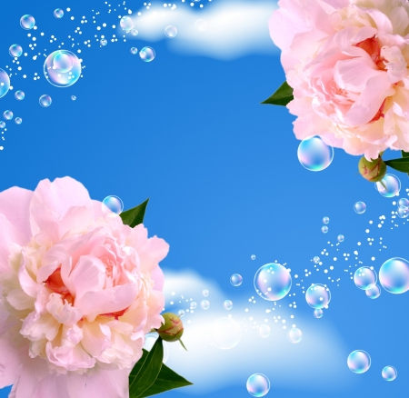 Peony and bubbles against the sky photo