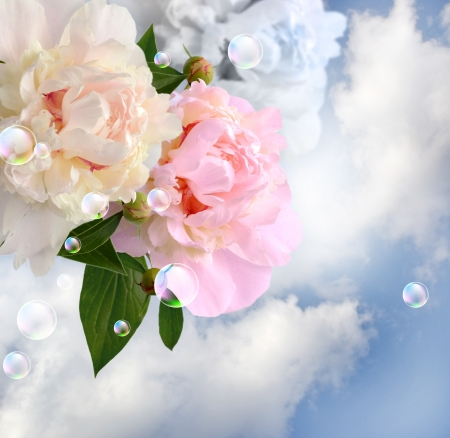 Peonies in the clouds and bubbles photo