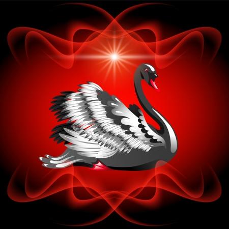fidelidad: Elegante cisne negro sobre fondo rojo y la estrella