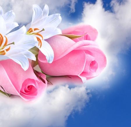 Rosa Rosen und Lilien in den Wolken Lizenzfreie Bilder