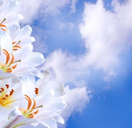 Weiß Illies in den Wolken Lizenzfreie Bilder