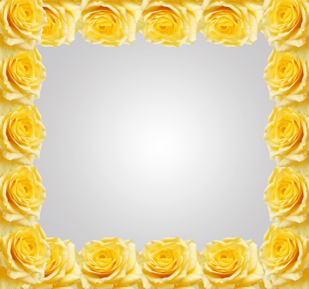 Yellow roses frame  Stock Photo