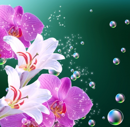magic lily: White lilies, pink orchid and bubbles  Stock Photo