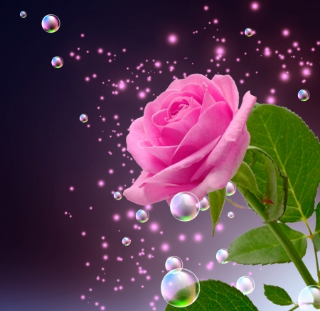 Rose, bubbles and stars photo