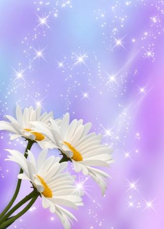 Daisy and shine stars photo