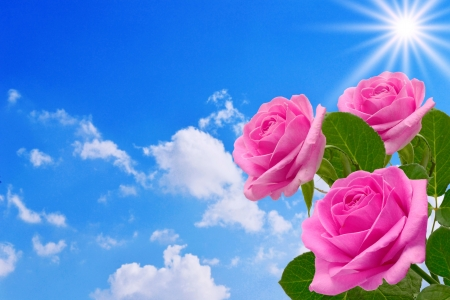 Roses against the sky photo