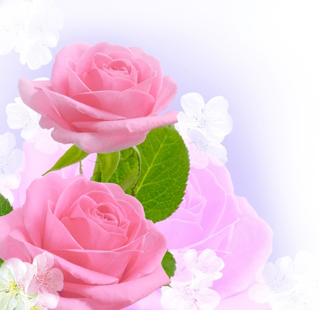 Card with pink roses and white flowers photo