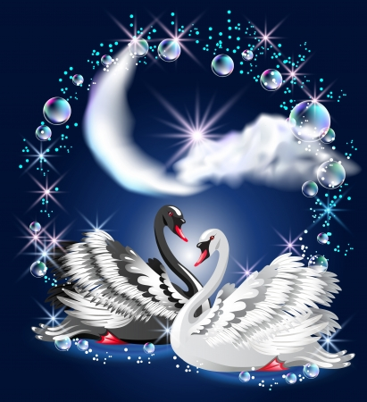 Black and white swans swim at night under the moon