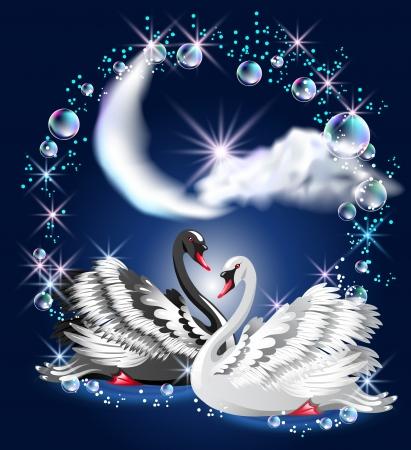 cisnes: Cisnes negros y blancos nadar en la noche bajo la luna