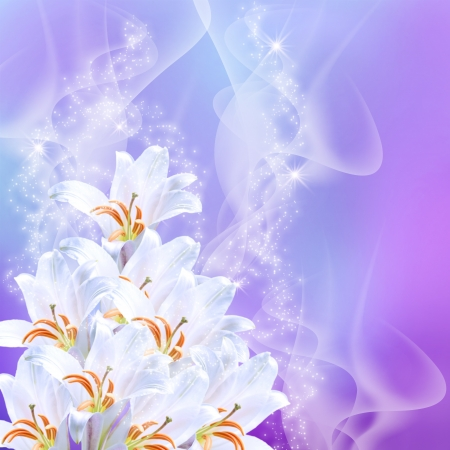 magic lily: White lilies and stars