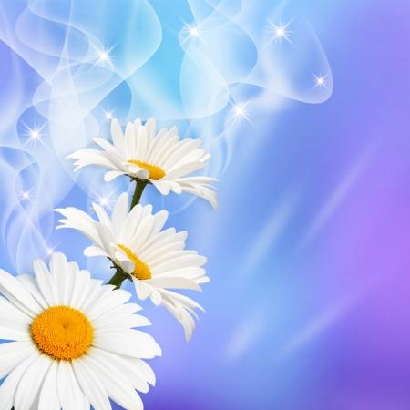 White daisy and stars Stock Photo - 15760567