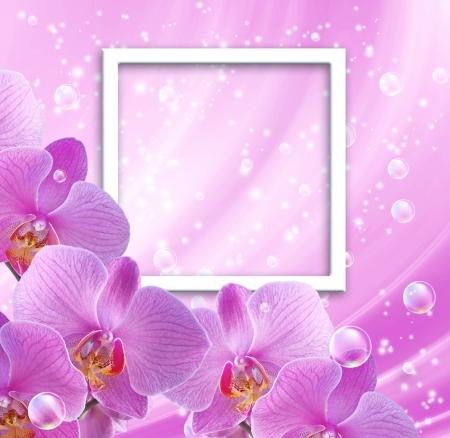 Rosa orquídea y marco de fotos Foto de archivo - 17014716
