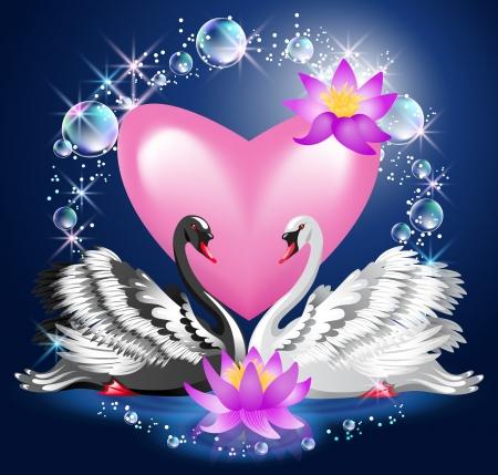 fidelidad: Cisnes blancos y negros nadar por la noche en el corazón