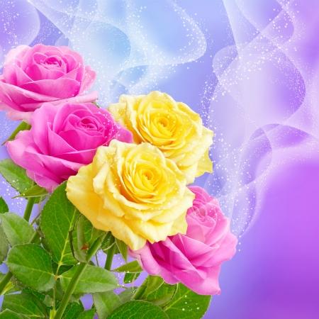 rosas amarillas: Las rosas rosadas y amarillas y las estrellas Foto de archivo