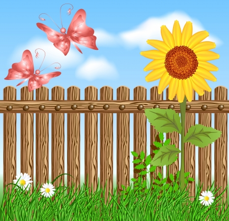 Wooden fence on green grass with sunflower against the sky