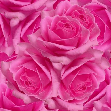 Pink roses  Seamless pattern  Foto de archivo