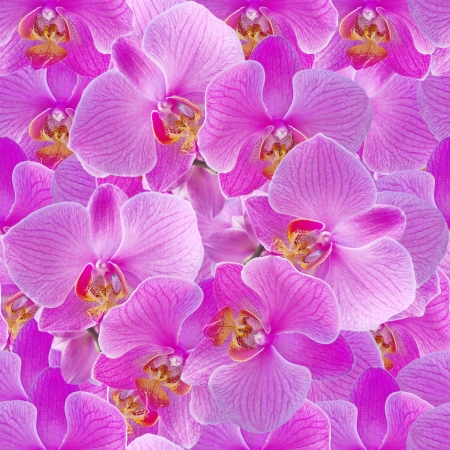 Seamless pattern  Background with pink orchids   photo
