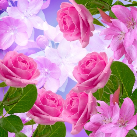 Cherry and roses blossom and shine stars photo