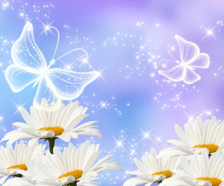 Daisy, transparent butterflies and shine stars photo