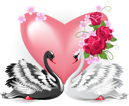 faithfulness: Elegant white and black swan with pink  valentine heart