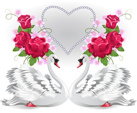 gentleness: Elegant white swans with valentine heart