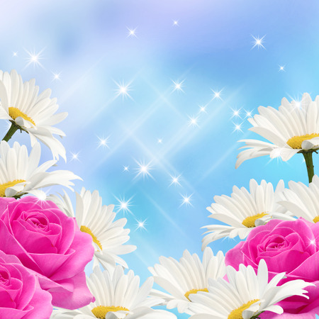 Daisy, pink roses and glowing stars photo