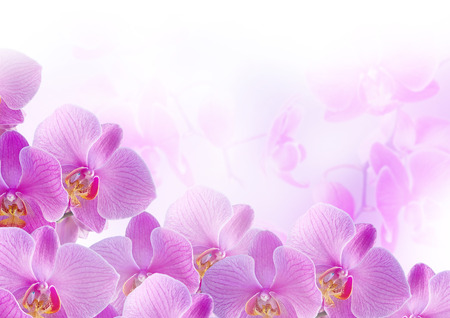 背景をぼかしのピンクの蘭