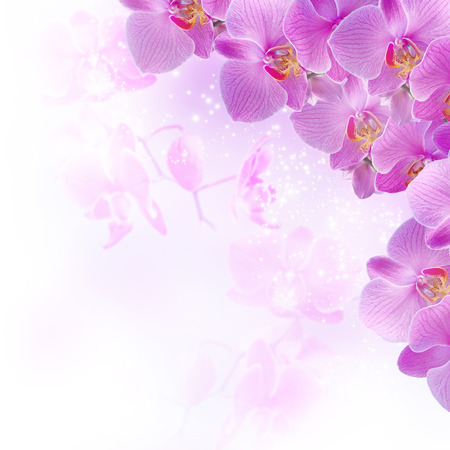 Pink orchids on blur background and glowing stars photo