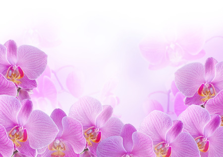 Pink orchids on blur background photo