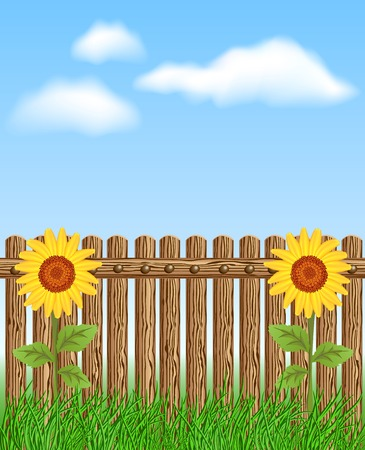 sky and grass: Wooden fence on grass with sunflower against the sky and clouds