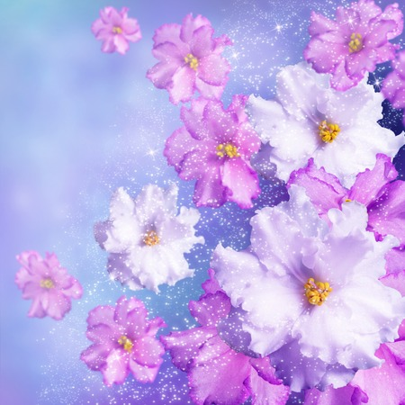 Celebratory background with violets and shining stars photo