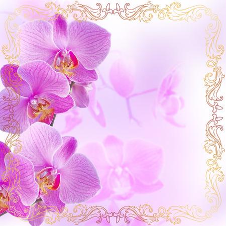 borde de flores: orquídeas rosadas con el ornamento de oro de la vendimia en el fondo de la falta de definición
