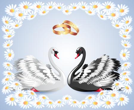 fidelidad: cisnes blancos y negros elegantes con anillos de boda y ornamento floral de la margarita