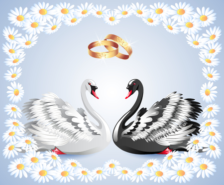 faithfulness: Elegant white and black swans with wedding rings and floral daisy ornament