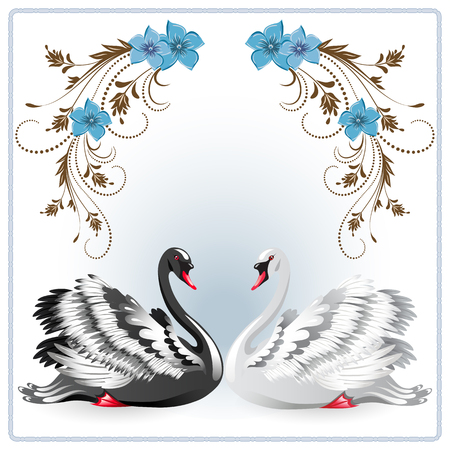 fidelidad: Elegant white and black swan on background with floral ornament