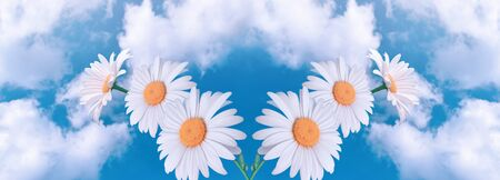 Amazing fantasy white daisy flowers against sky with fluffy clouds on a sunny day, eco environmental natural background, clean environment and pure air concept, wide panoramic nature banner