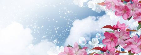 Amazing white cherry with pink sakura flowers and soap bubbles against the clouds sky. Spring banner. Concept clean air and ecology environment.