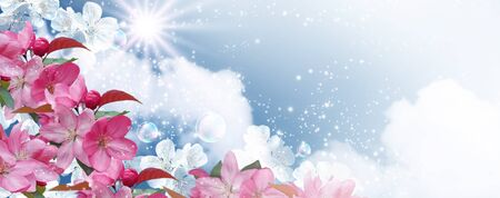 Amazing white cherry with pink sakura flowers and soap bubbles against the clouds sky and sun. Spring banner. Concept clean air and ecology environment.
