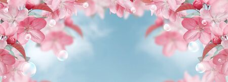 Amazing pink sakura flowers and soap bubbles against the clouds sky  Stockfoto
