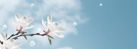 Amazing white magnolia flowers and soap bubbles against the clouds sky
