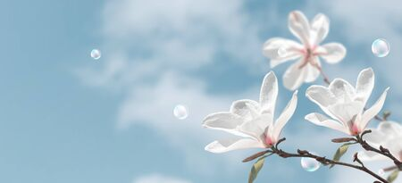 Amazing white magnolia flowers and soap bubbles against the clouds sky. Fantasy spring background.