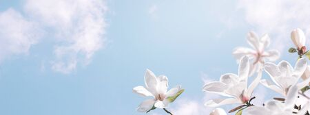 Delightful blooming white magnolia flowers against the magic clouds sky. Fantasy spring background. Stockfoto